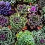 How And What You Can Plant For A Fantastic Fall Food Garden