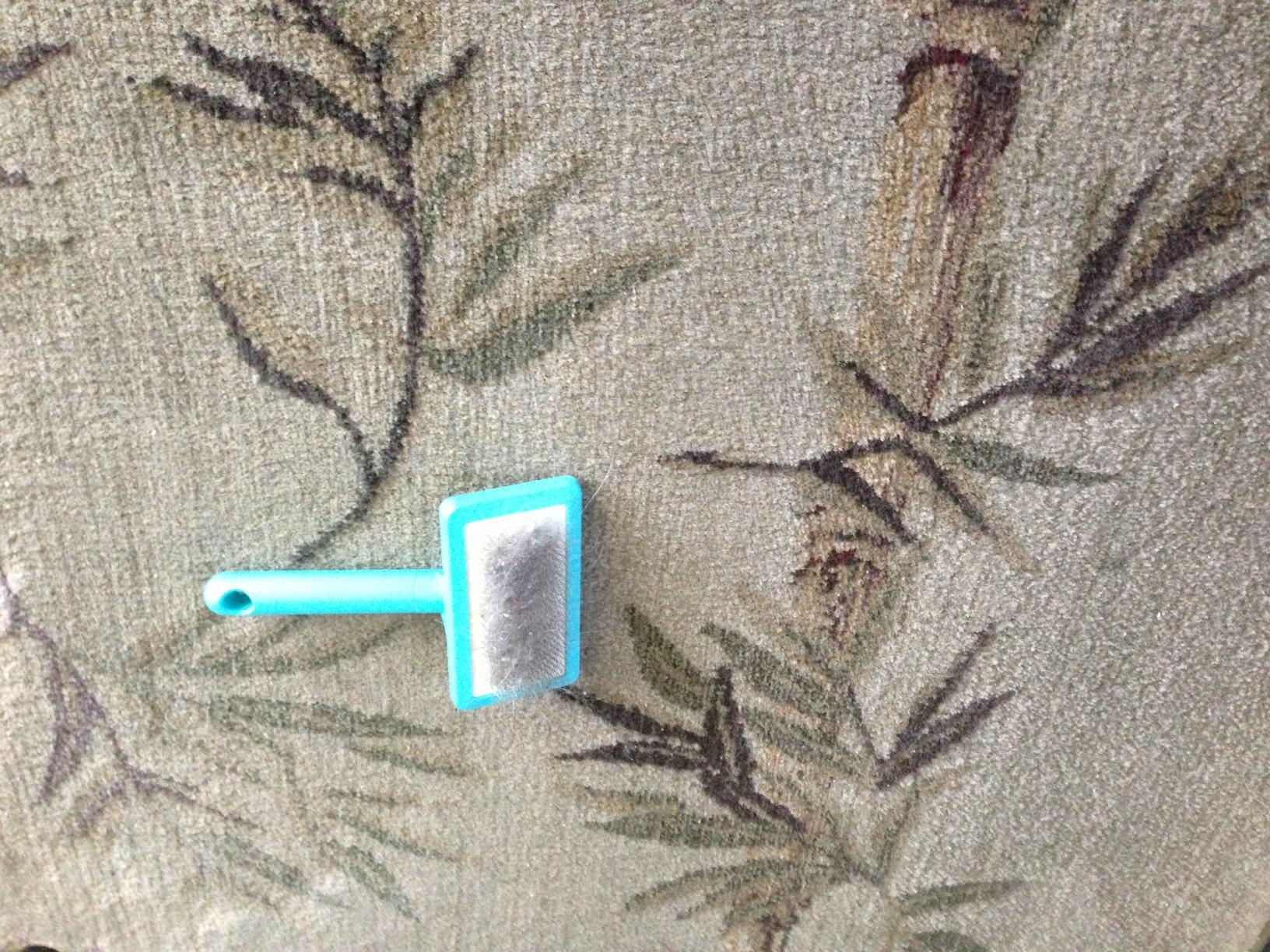 Diy Get Pet Hair Out Of Carpet All Natural Amp Good