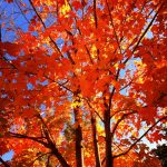 101 Fun Things To Do This Fall