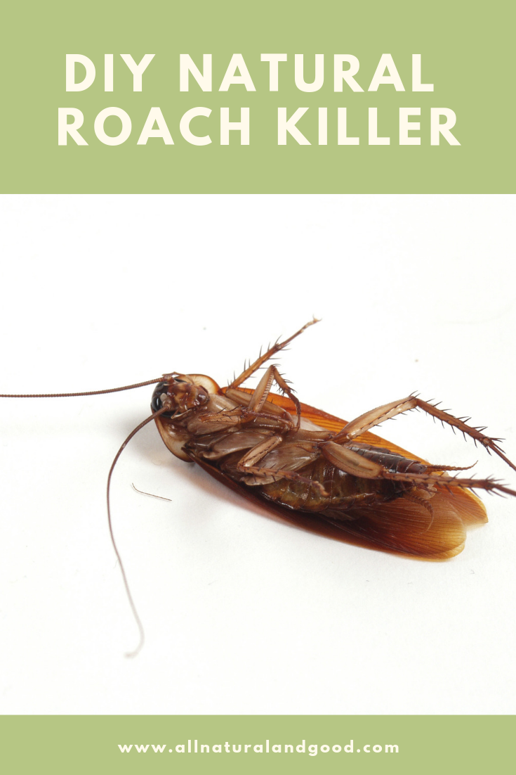 DIY homemade natural roach killer for roaches, ants and other household pests.