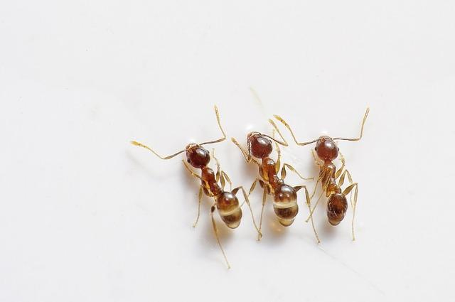 Homemade Ant Killer - All Natural & Good
