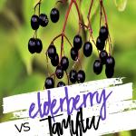 Elderberry Vs Tamiflu – Which is Better?