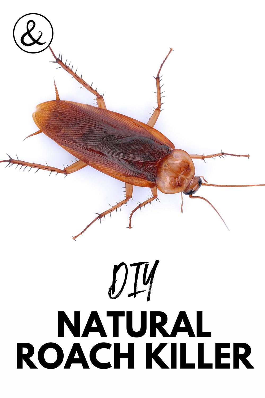 DIY Natural Roach Killer