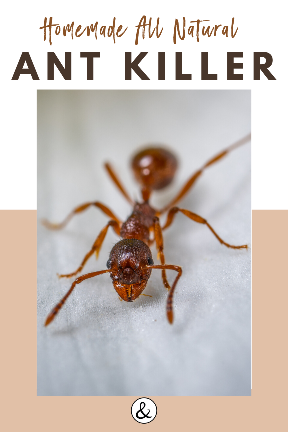 Homemade All Natural Ant Killer